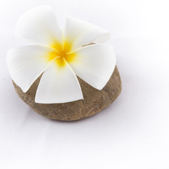 isolated of the foot with frangipani flower in spa on white back