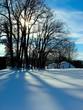 silhouette arbre et neige
