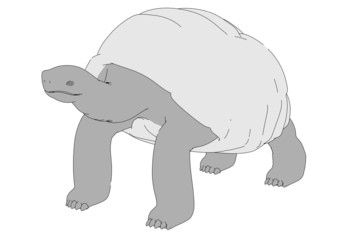 cartoon image of geochelone nigra