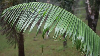 Close-up of heavy rain in the rainforest.