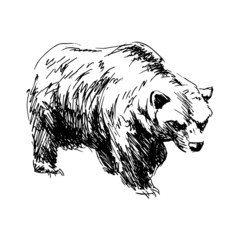Hand drawing a bear. Vector illustration