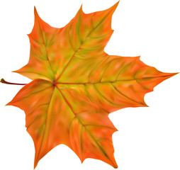 illustration with bright autumn maple leaf