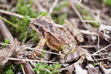 mimic frog poster