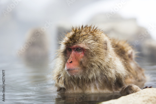 Snow monkey in a natural onsen (hot spring), Jigokudani Park