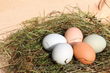 bio eier im nest