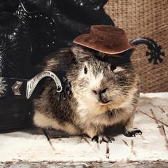 Cool boy. Funny guinea pig over old wooden desk