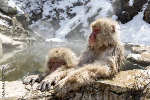 Mother and baby Japanese snow monkey relaxing.