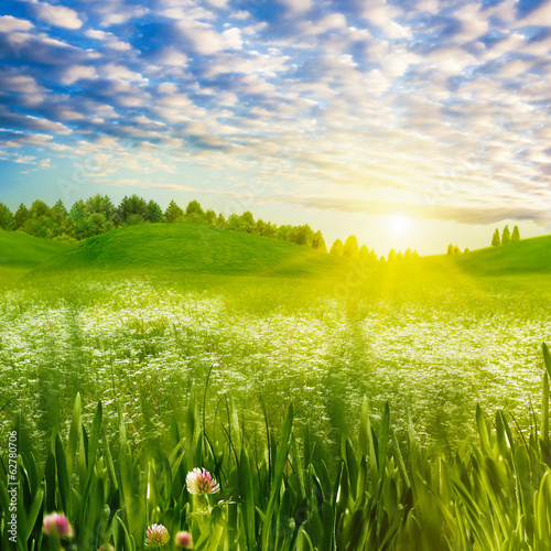 Beauty evening on the meadow, abstract summer landscape