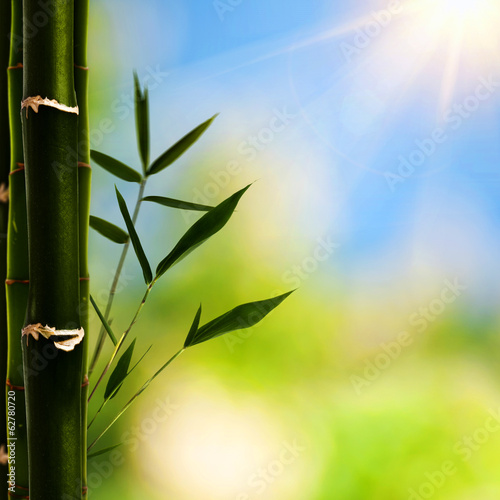 Bamboo grass against abstract natural backgrounds for your desig
