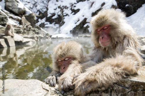 Japanese snow monkey mother and baby in a hot spring.