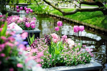 Beautiful flowers in Keukenhof Gardens