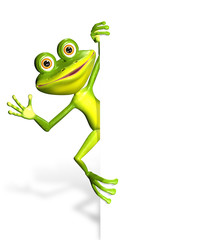 Frog and white background
