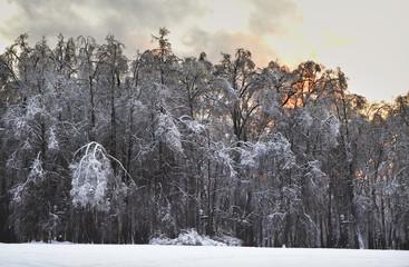 Зимний лес. Москва. Россия