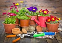 Narzędzia ogrodnicze i kwiaty