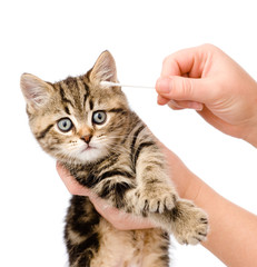 Veterinarian cleans ears to a small kitten. isolated on white