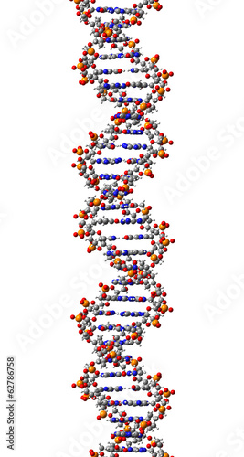 DNA molecule. 3D Illustration