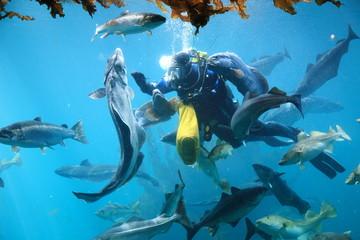acquario di alesund norvegia