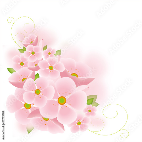 Cherry tree blossoms isolated on pink  background.