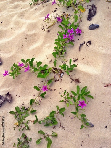 purple flowers on the sand