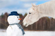 Portrait of grey horse with snowman - 62793951