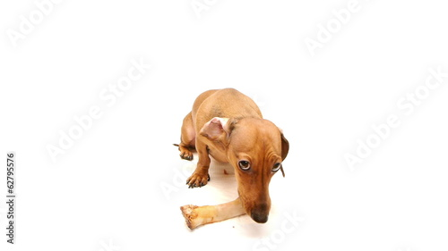 HD - Dog guarding a bone