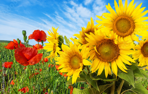 Foto op Canvas Poppy sunflowers and poppies