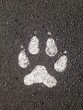 paw print on pavement