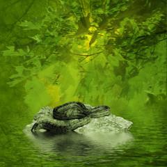 Natural, water landscape