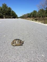 Yolda Kaplumbağa