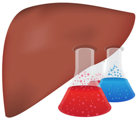 Liver Research