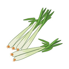 Green onion isolated illustration