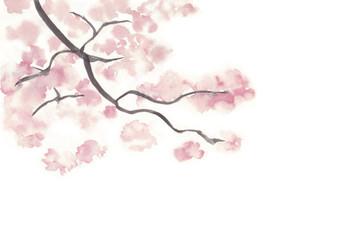 桜の木の枝