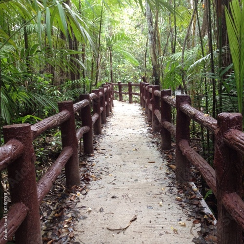 Walkway in deep forest