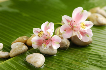 Pile of stones with gorgeous,orchid on banana leaf