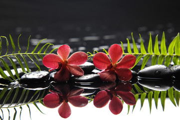 Two red orchid with fern on therapy stones
