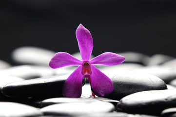 black stones and pink orchid