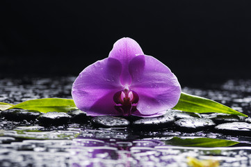 Pink orchid and black stones with palm leaf on wet background