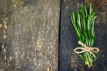 Sheaf of rosemary