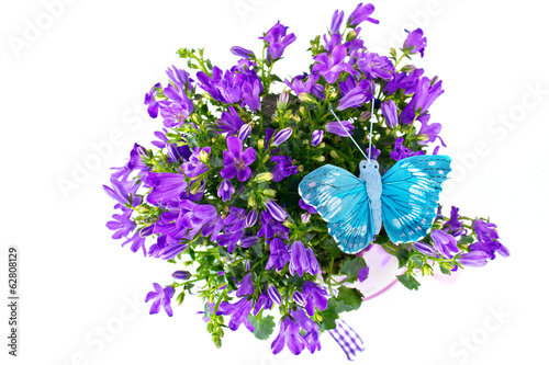 Bouquet of campanellis with an artificial butterfly in a cachepo