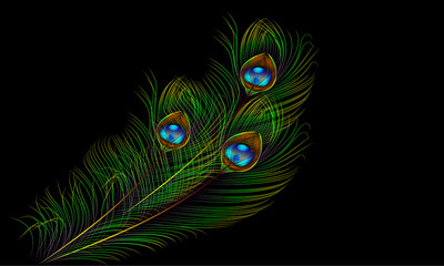 peacock feather vector background