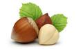 Hazelnuts and leafs