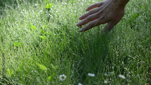 hand touch wet grass covered with dew drops in morning