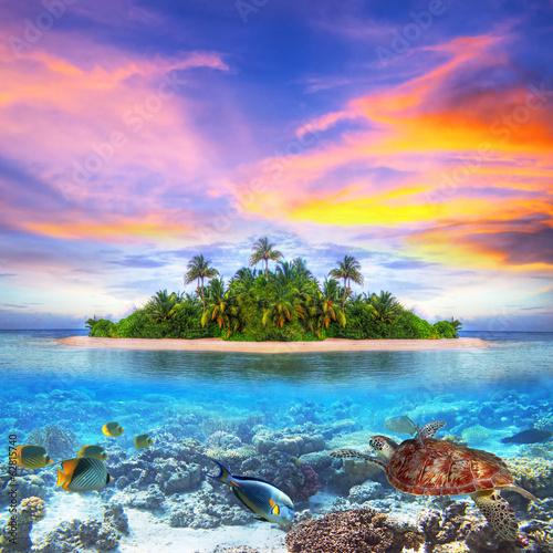 Leinwanddruck Bild Tropical island of Maldives with marine life