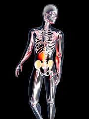 Anatomie - Bauchschmerzen