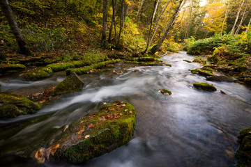 Stream in autumn scene