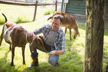 An organic farm in the Catskills. A man in a paddock with two large goats.