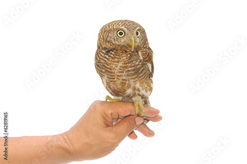 owl sitting on handler's hand