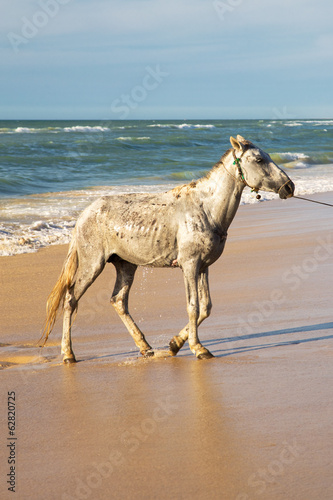 White horse on beach in Senegal