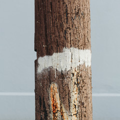 An old cracked and worn wooden telephone pole, with a white painted strip around it.
