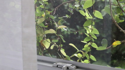 Rain through the window with lush green foliage